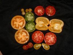 Tomato_taste_test__april_06-1.jpg_(12)