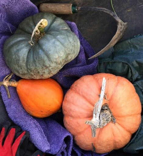 Pumpkins_group